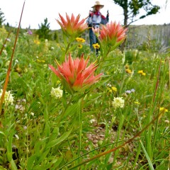 Rocky Mountain Front Naturalist Tour